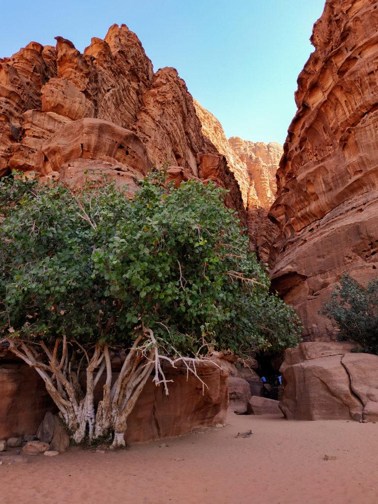 kanion wadi rum