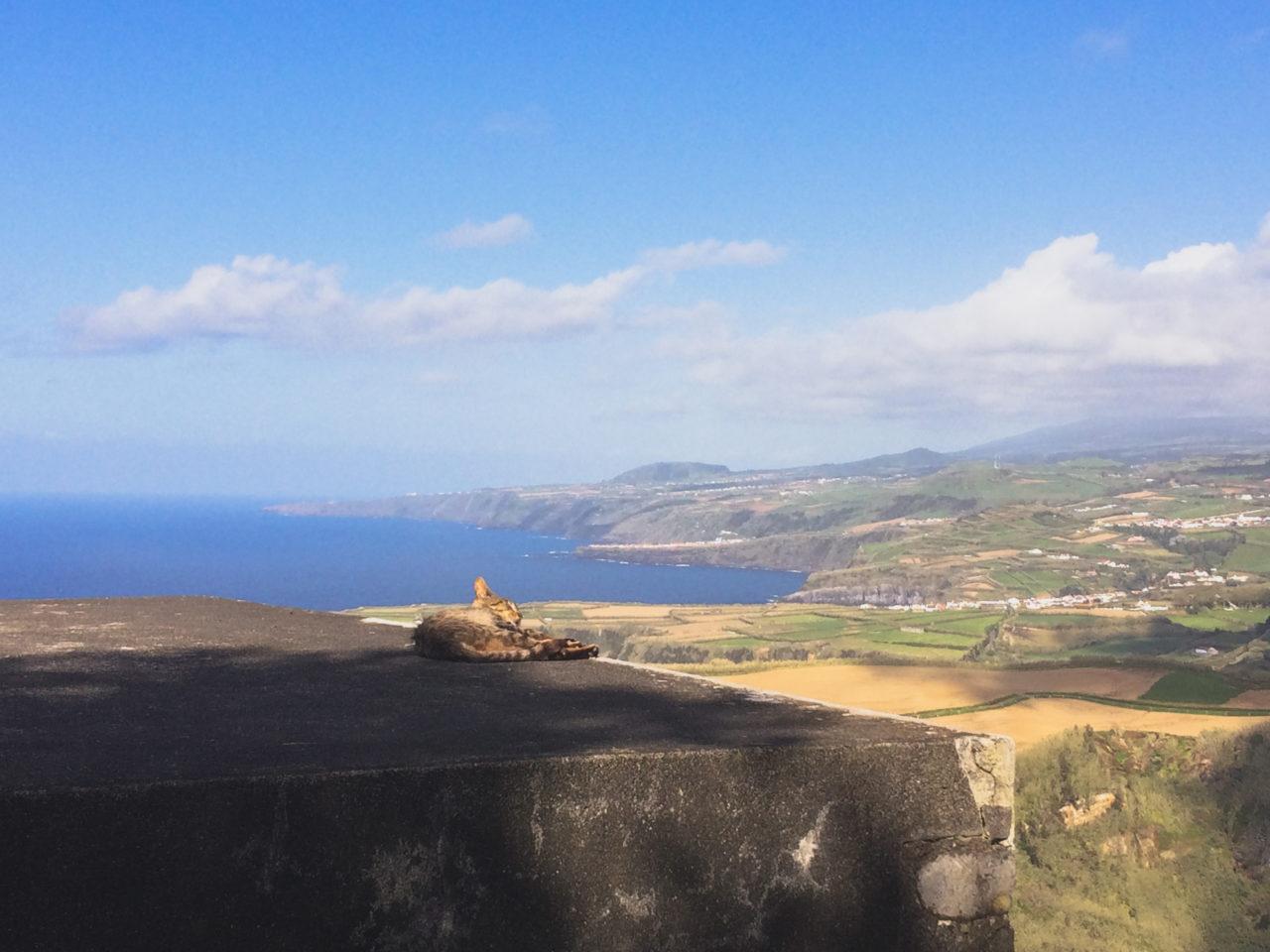 azory kot panorama